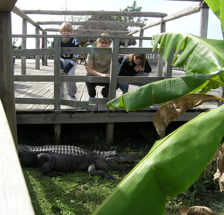 Alligator_Hammock
