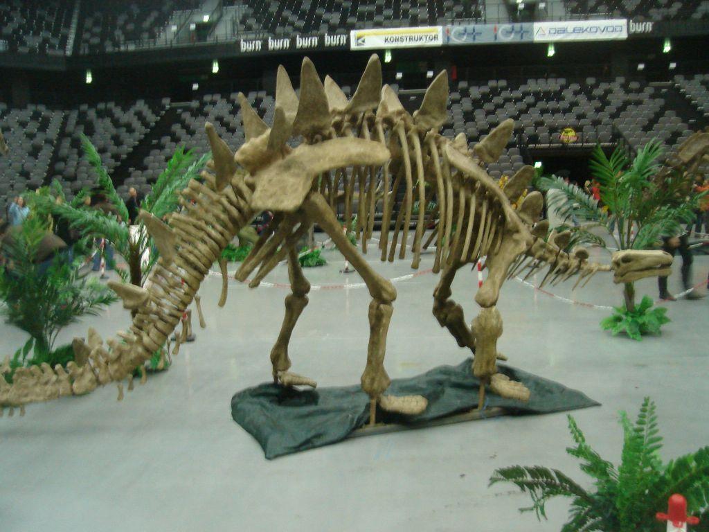 Toujiangosaurus