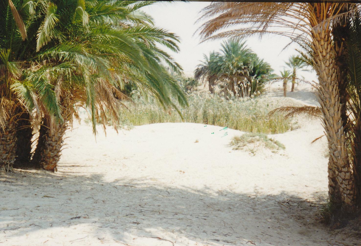 Pješčana, pustinjska Oaza