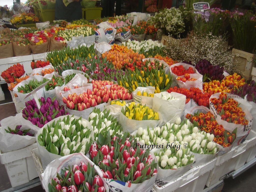 Koliko tulipana !