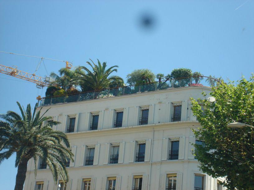 Šuma na krovu
