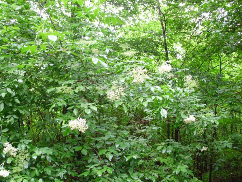 Šuma puna bazge
