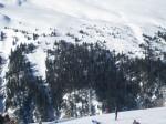 šuma pod snijegom