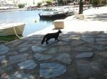 Nikolaus zaljev crna mačka