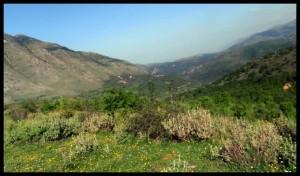 Albanska planina