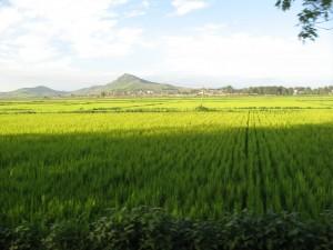 Rižina polja