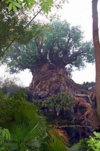 Animal Kingdom - The Tree Of Life