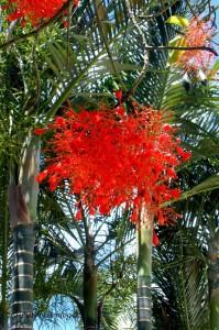 Ik Kil Cenote 3