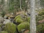Nacionalni park Vitoša i Sofija - nastavak