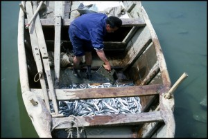 """Ribar s ulovom i cipelama i čarapama u """"čistoj"""" vodi"""