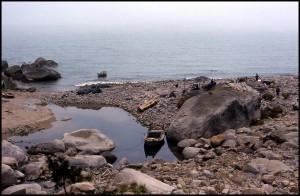 Sušenje ribica na kamenu