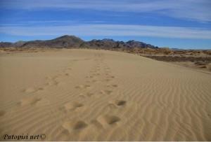 Slika 15. Detalj iz pustinje