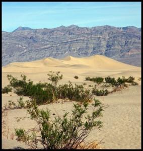Žuti pijesak
