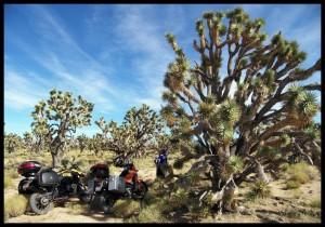 u pustinji Mojave