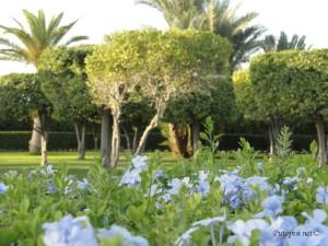 Princezini vrtovi