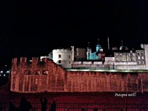 Tower of London i crveni makovi