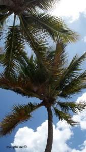 Palma od kokosa - kokosova palma
