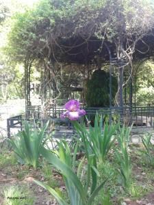 Amelijini vrtovi 4