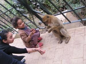 Divlji majmuni koji žicaju kikiriki