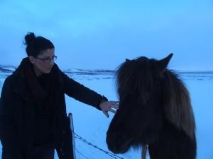 Islandski konji veličine su ponija te su jako temperamentni