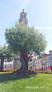 gimnastika pored drveta