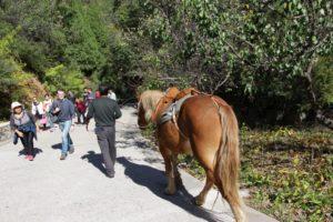 kineski-konj