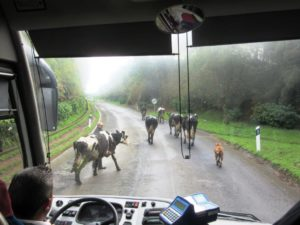 Krave blokiraju put